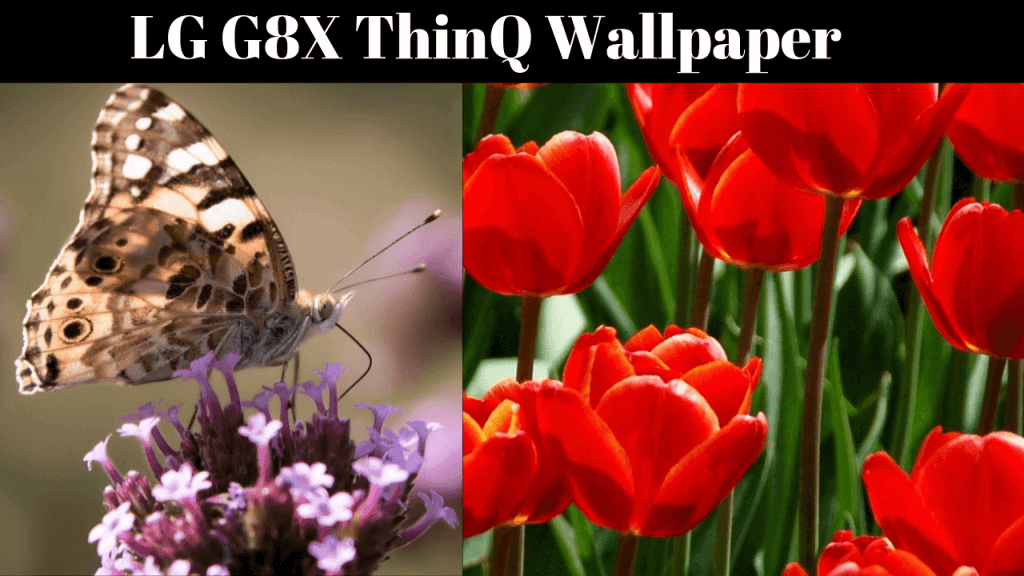 download the stock wallpapers of LG G8X ThinQ